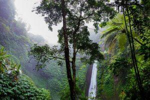 Tropische Nutzpflanzen – oder wo die Schokolade auf den Bäumen wächst...